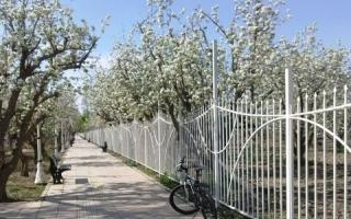لزوم  تکمیل باند سبز پیادهراه «باغ سیب»
