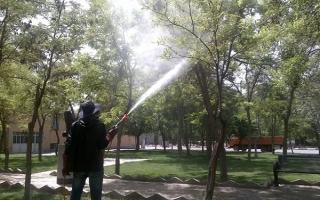 درختان کرج آبشویی و سمپاشی میشوند