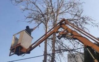 عملیات حذف سرشاخههای خشک درختان در مناطق دهگانه کرج